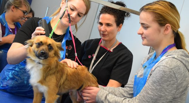 Female dog grooming students cutting the hair of a dog