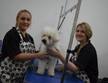 Day Dog Grooming Courses London