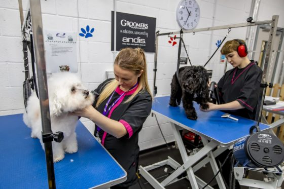 Two Dog Grooming students in salon with two dogs